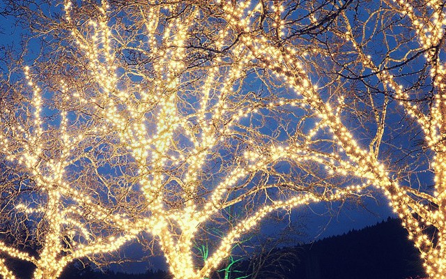 How To Wrap Trees With Christmas Lights